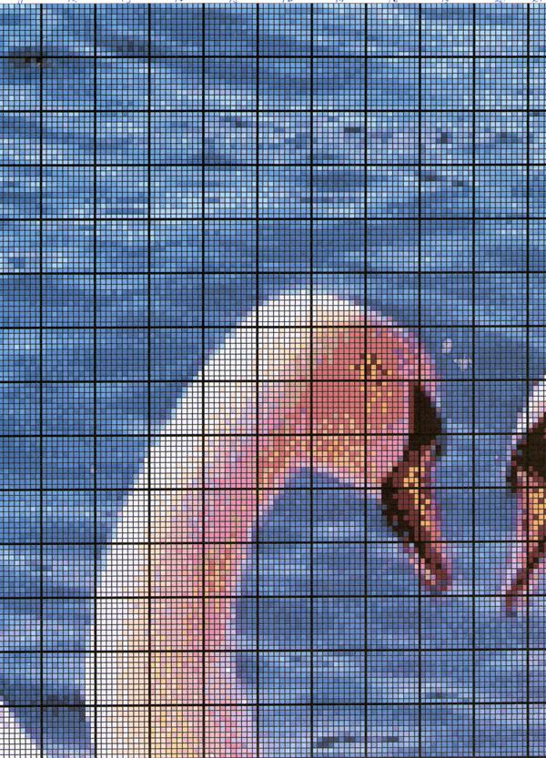 Схема.  Пара  лебедей