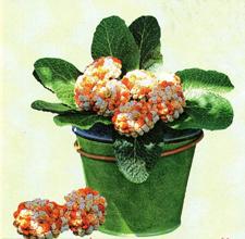 Первоцвет крючком