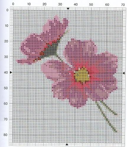 Розовые  цветы и крокусы