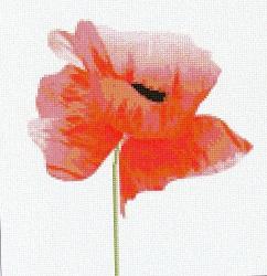Оранжевый букет и Цветок мака